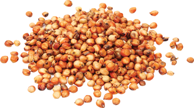 Sorghum - For Flour Milling