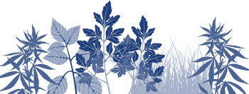 Herb Processing - Alvan BLanch