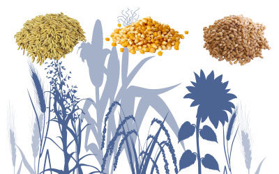 Grain Cleaning & Silos