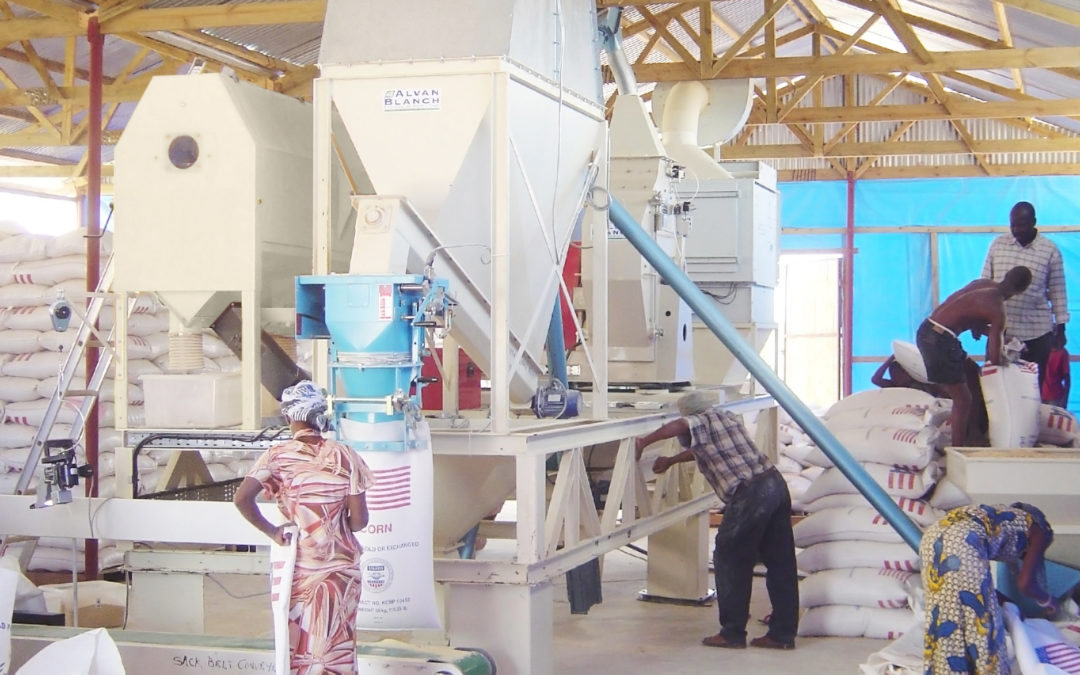 Skid-Mounted Wholemeal Maize Flour Mill – East Africa