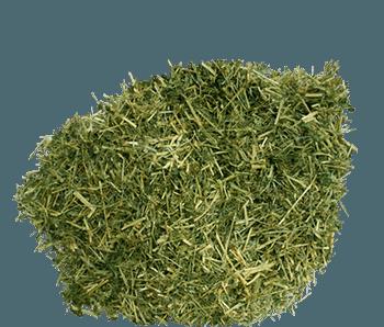 Dried Hemp-Seed-Alvan-Blanch-Hemp-Seed-Dryer