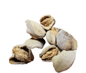 Dried Almonds-Alvan-Blanch-Almonds-Dryer