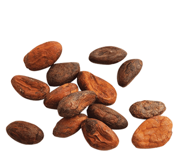 Dried Cocoa Beans-Alvan-Blanch-Cocoa-Beans-Dryer