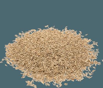 Dried Grass Seed -Alvan-Blanch-Grass-Seed-Dryer