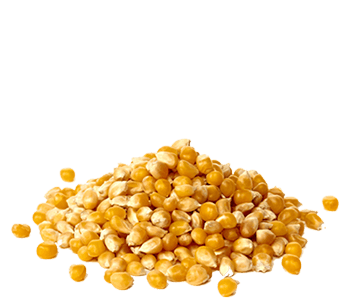 Dried Maize-Alvan-Blanch-Maize-Dryer