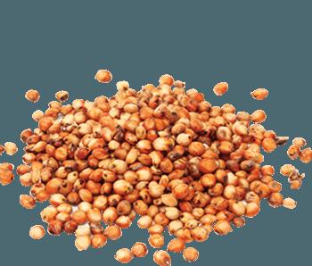 Dried Sorghum-Alvan-Blanch-Sorghum-Dryer
